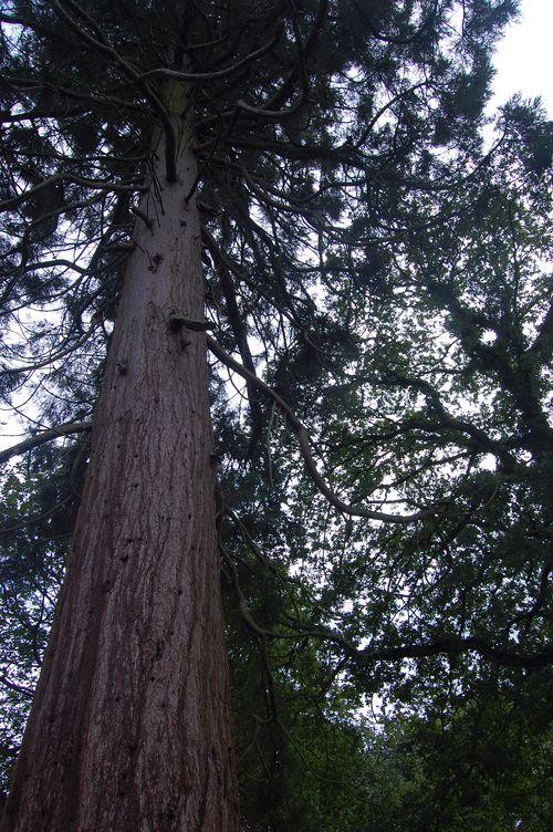 Tree Felbrigg