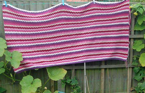 Sophie's Uni Blanket veg plot