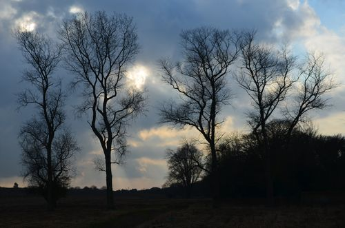 A group of trees, West Caister