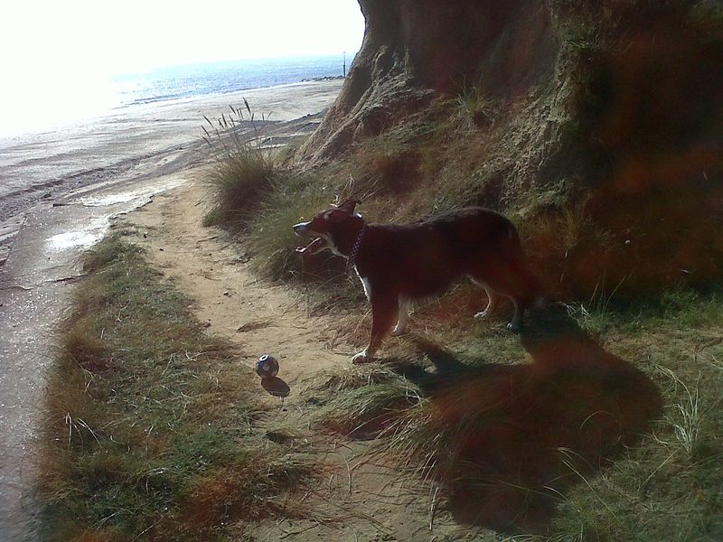 Alfie near cliffs 090912
